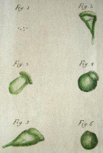 Fig3-Muller-1776
