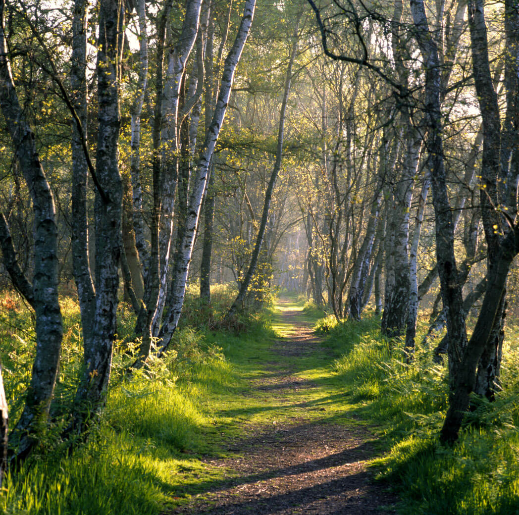 2017-05-3-woodland-path-in-sherwood-forest-low-res